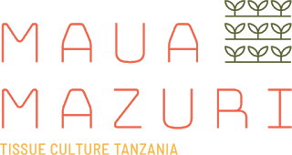 Job Opportunity at Maua Mazuri, Financial Controller